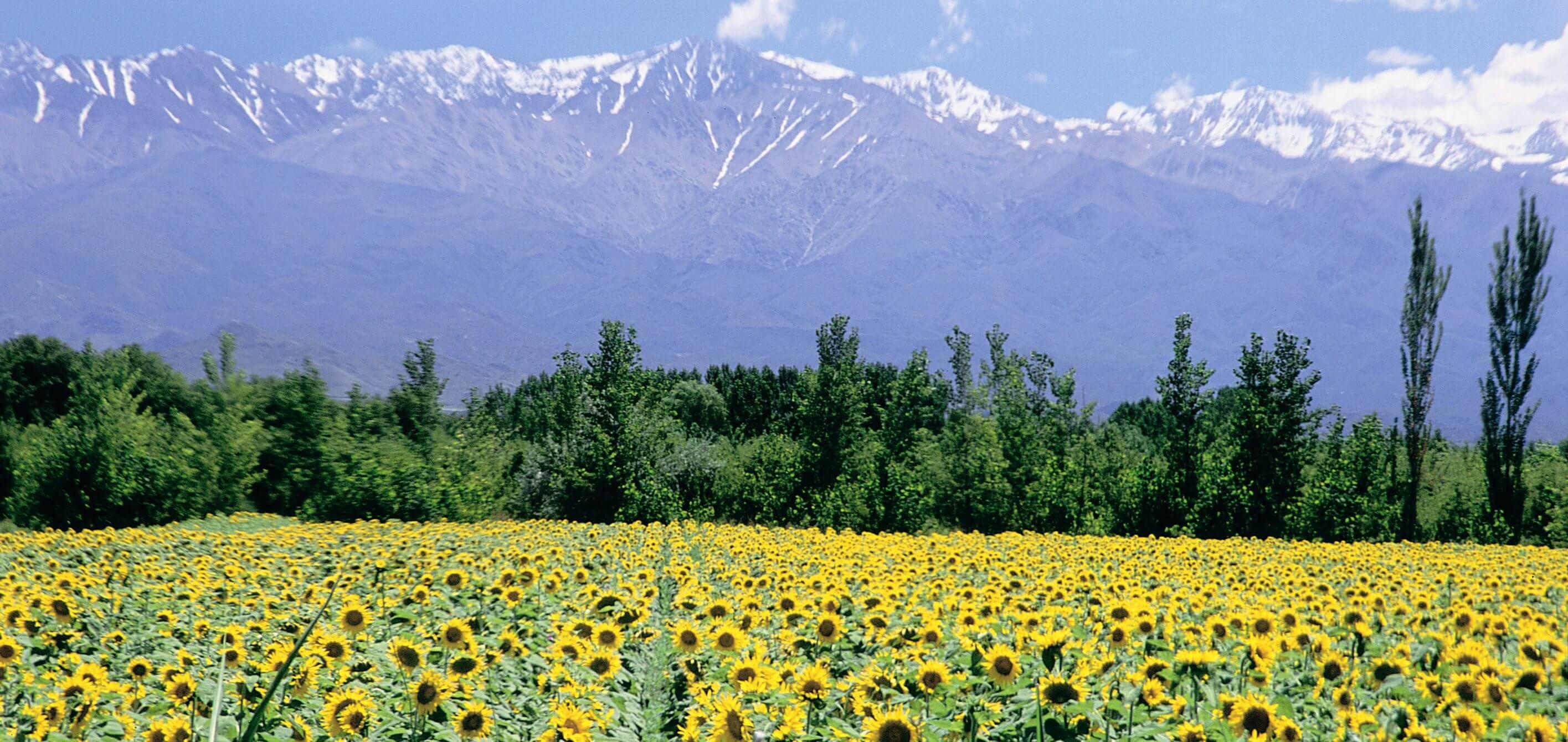 Mendoza tour