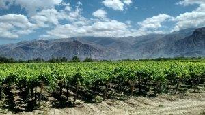 Campos y viñedos