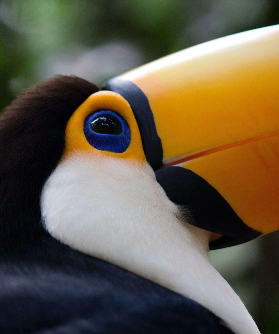 Voyage en Argentine: Chutes d'Iguazu