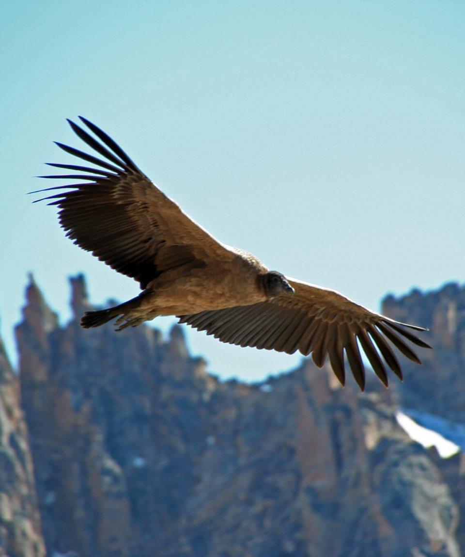 Condor-Torres-Del-Paine