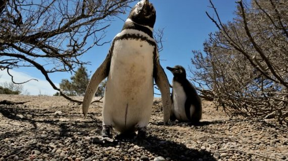 Viaje a Argentina: Punta Tombo