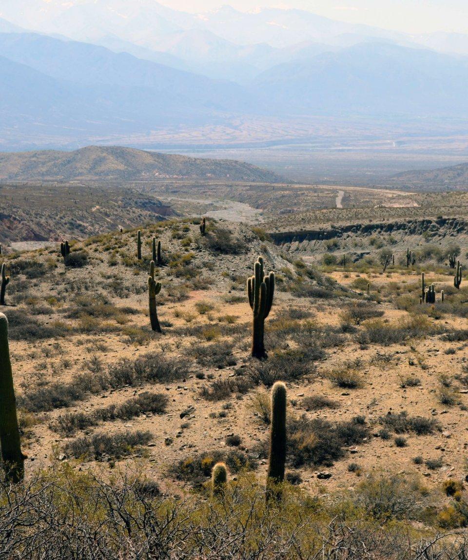 Salta: Parque Nacional Los Cardones