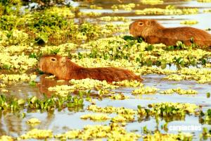 Fauna del Parque Nacional Iberá