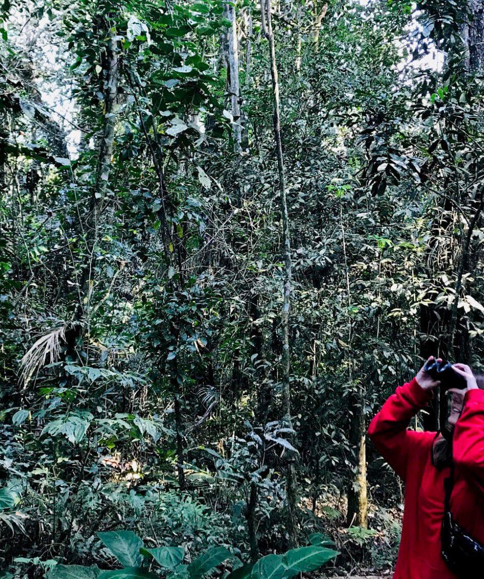 Explorar la selva con todos los sentidos